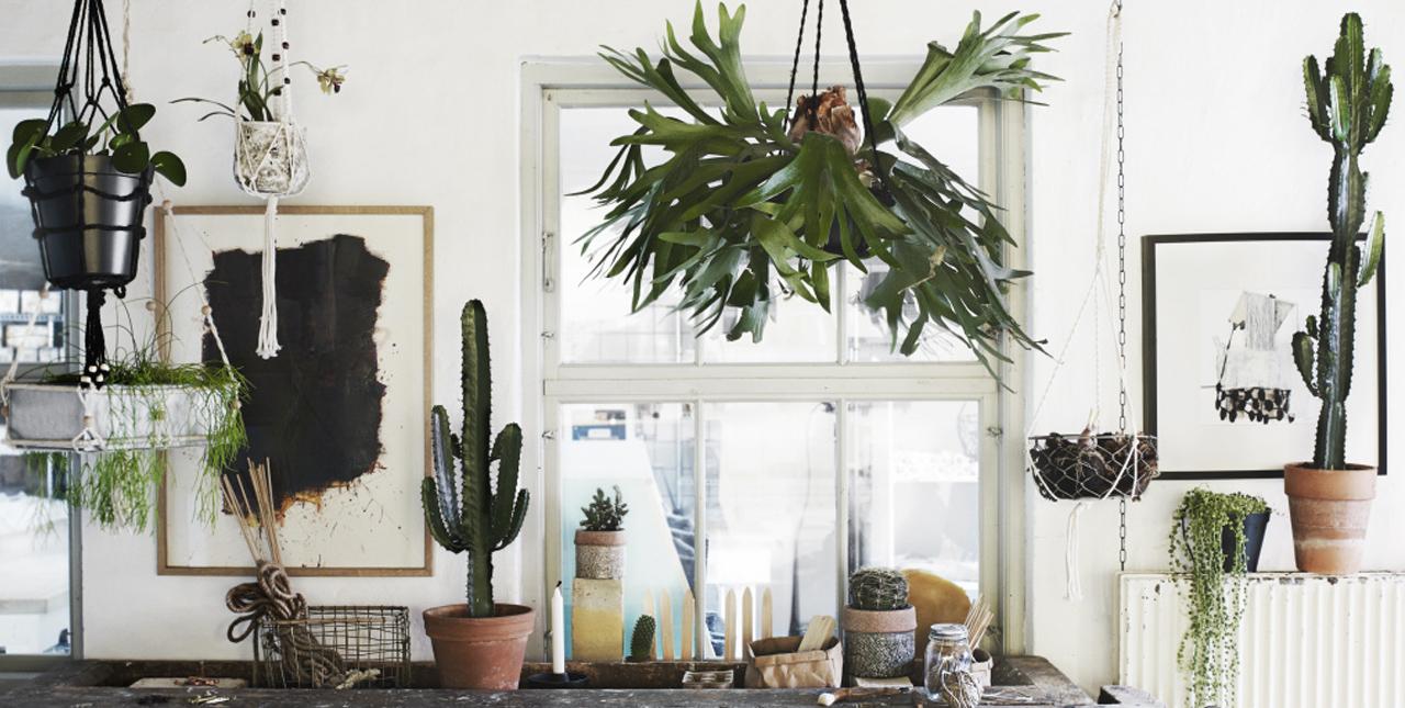 Le phénomène des plantes d'intérieur